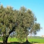 Profile picture of antonietta.palmieri