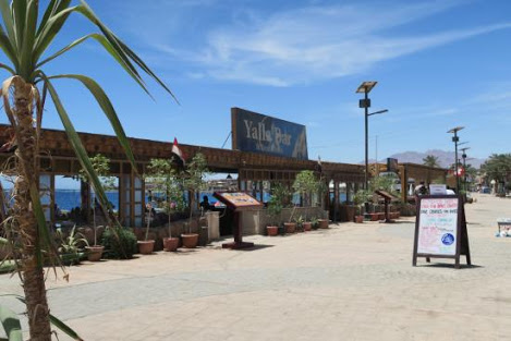 Help me to serve customers at my restaurant and get accommodation & food for free (Egypt, South Sinai, Dahab)